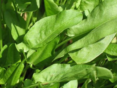 Многолетние травянистые растения на