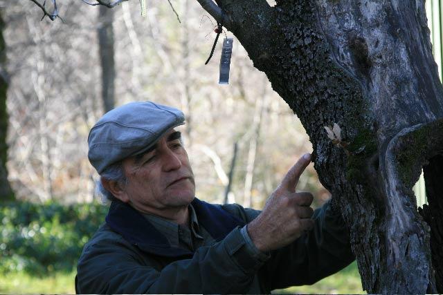 Обрезка деревьев важные мелочи