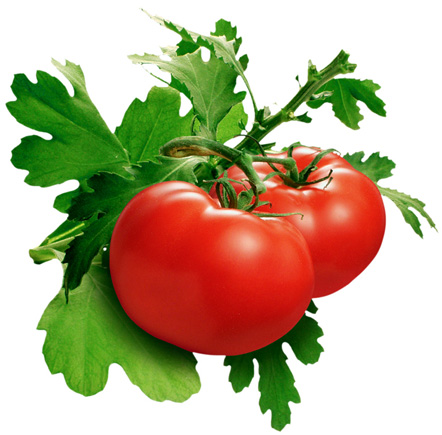 Сертификат на испанские помидоры вызвал сомнения